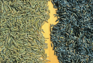 Good Fats, Wild Rice